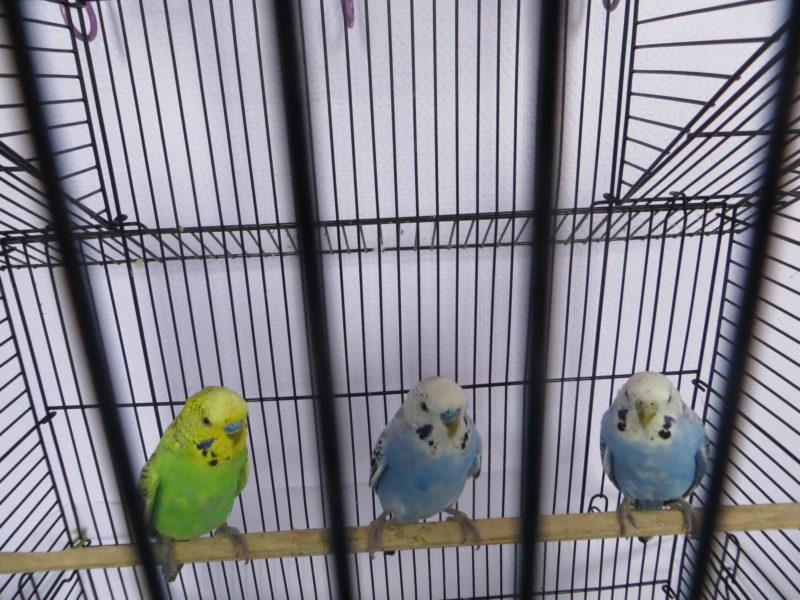 Trois nouveaux élèves dans la classe